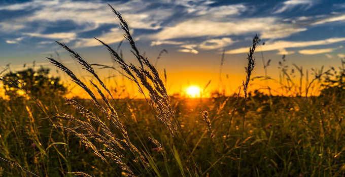 philippine crop insurance