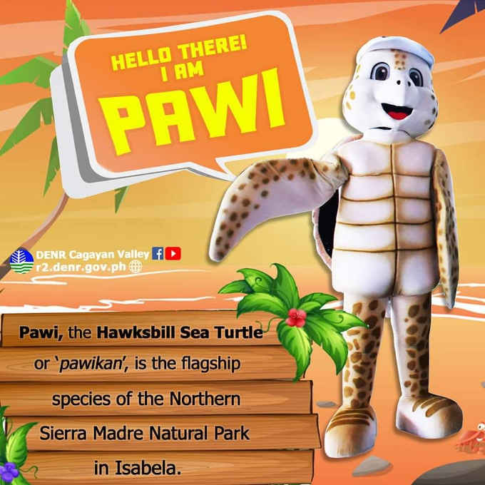 pawi, the hawksbill sea turtle