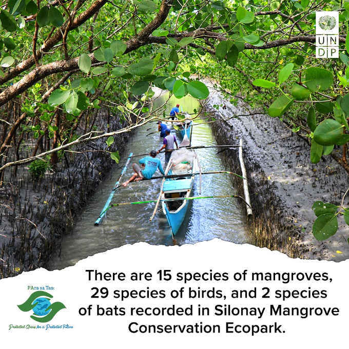 silonay mangrove conservation ecopark