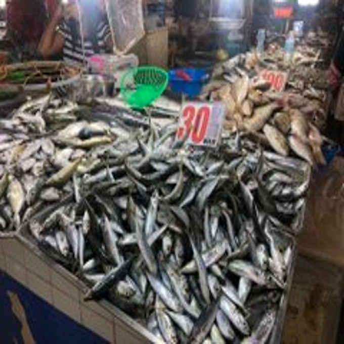 galunggong price