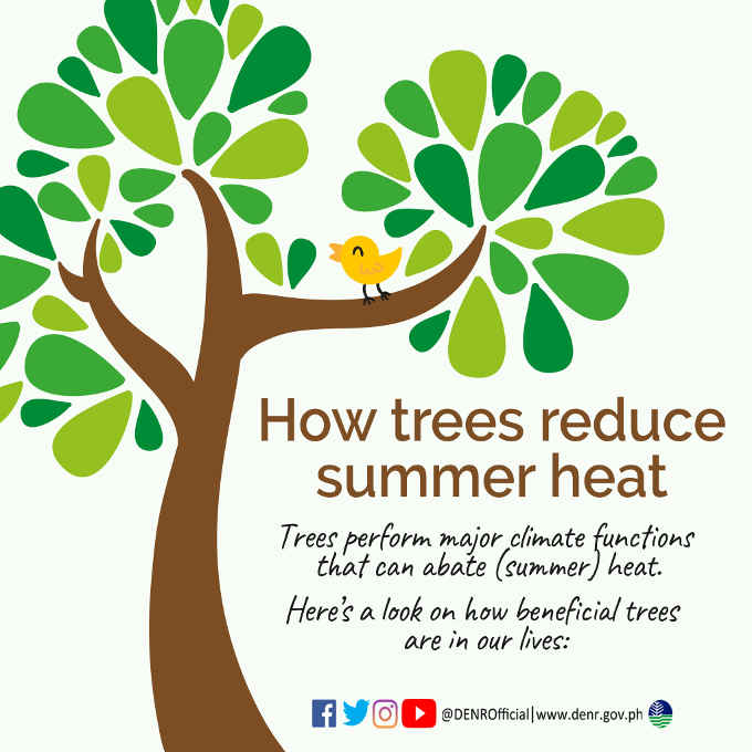 how trees reduce summer heat