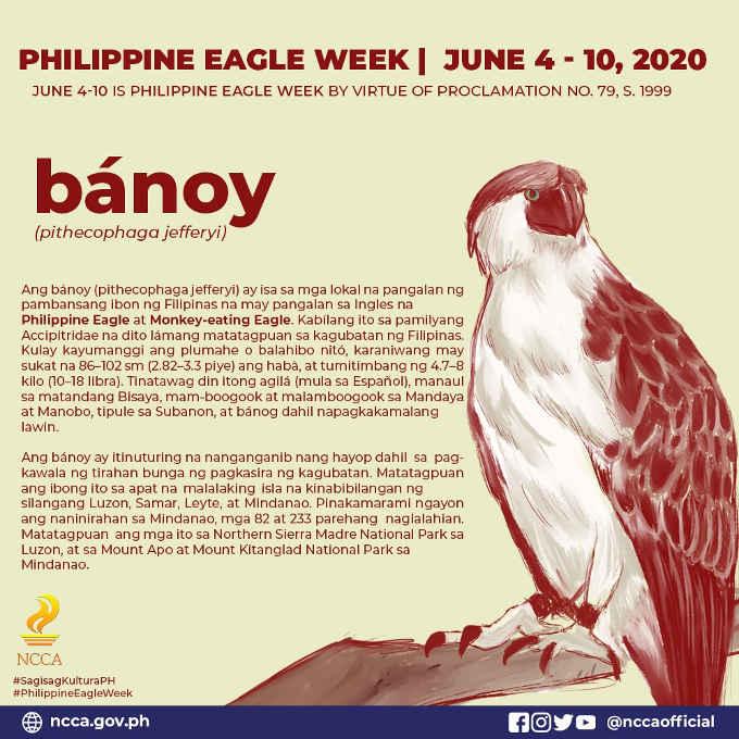 philippine eagle week