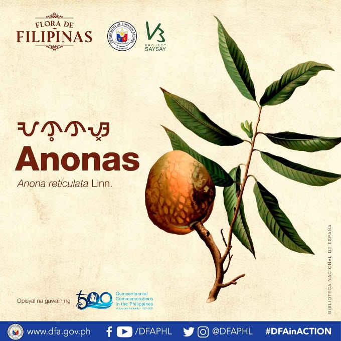 anonas fruit