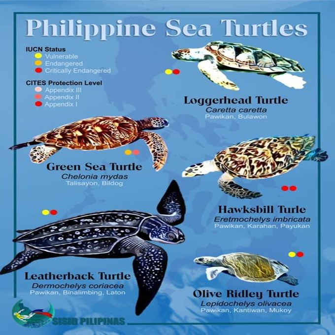 endangered sea turtles in the philippines