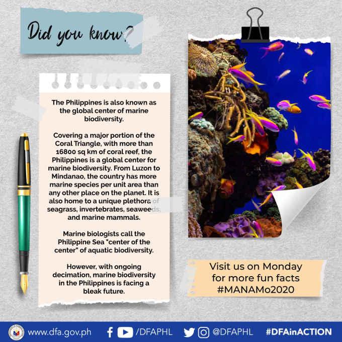 marine biodiversity in the philippines
