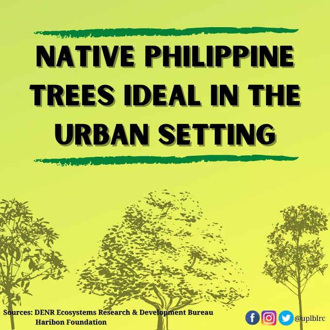 native philippine trees